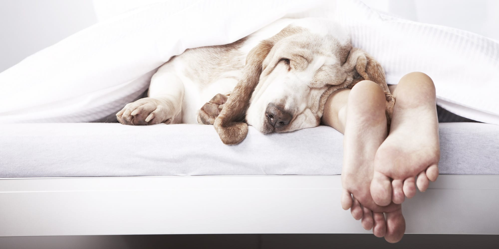 Letting your dog sleep in your bed meradog for Sleeping bed