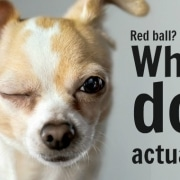 meradog colourblind dogs