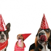meradog-dog-birthday