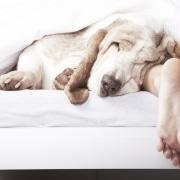 meradog sleeping in bed